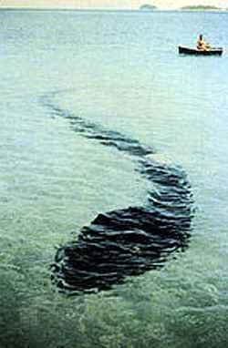 The Hook Island Sea Monster March, 1965