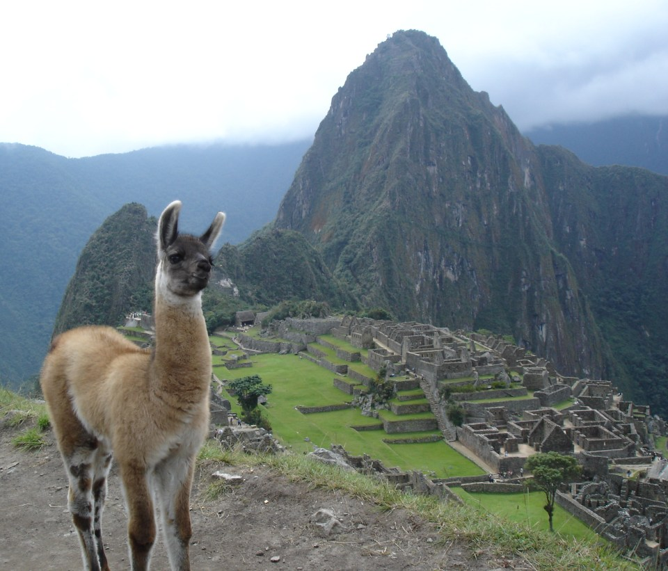 A young llama posing for the image with Machu Picchu in the background. Image credit: socialphy
