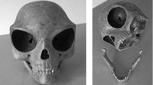 Ancient Aliens: Is The Sealand Skull That Of An Extraterrestrial?