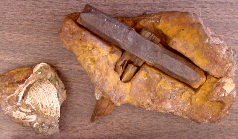 The 400 million year old hammer