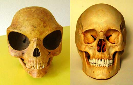 10 things you should know about the 'alien-like' Sealand skull