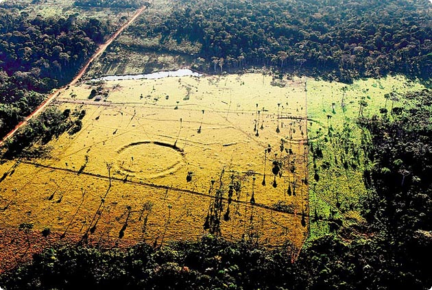 A Previously Unknown Civilization Has Been Found Deep Inside The Amazon