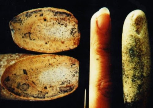 The 100 million year old finger resembles a modern human finger