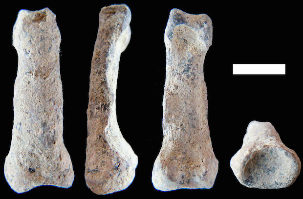 These images show the oldest human hand bone ever found. It was discovered in Olduvai Gorge, Tanzania, and is believed to be more than 1.84 million years old. M. DOMÍNGUEZ-RODRIGO