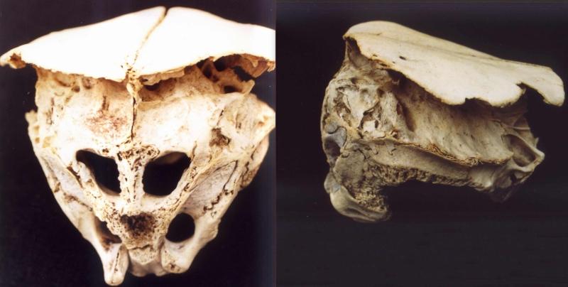 Alien Skull Bulgaria