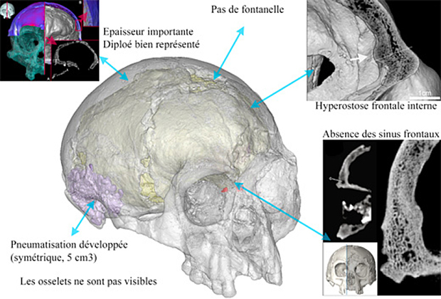 Revision of some internal features of Liang Bua 1 on cranial thickness, internal structure Photo: Antoine Balzeau-CNRS/MNHN