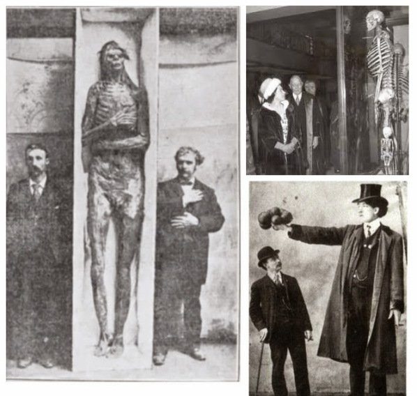 USA-Giants-Skeletons