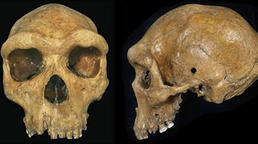 Mind-boggling discovery: A 300,000-thousand-year-old skull with a bullet hole?