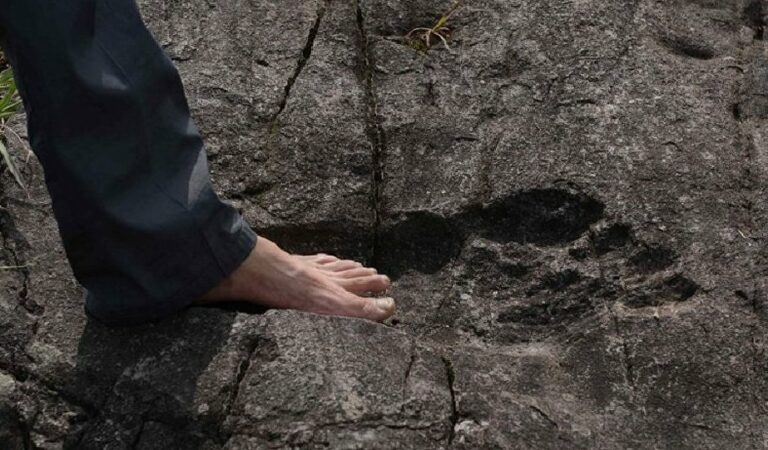 A giant footprint has been discovered in China