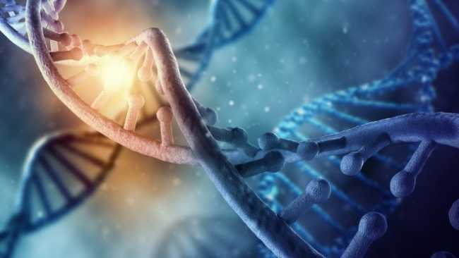 Researchers find evidence of DNA belonging to an unknown human species
