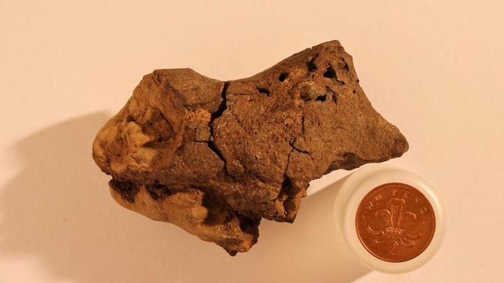 Researchers Confirm: 133-million-year-old fossilized dinosaur brain is authentic