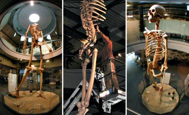 Hidden History revealed: 7-meter-tall giant skeletons on display