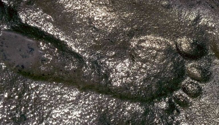 This 290-million-year-old human footprint has experts baffled