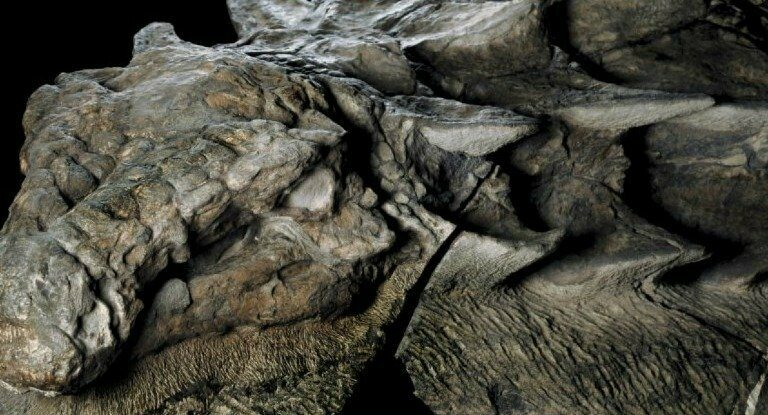 This 110-million-year-old Dinosaur Fossil is so well-preserved—It looks like a Statue