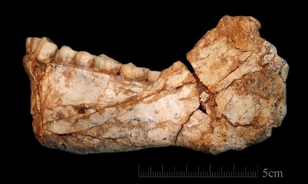 Newly-found 300,000-year-old fossils rewrite human history