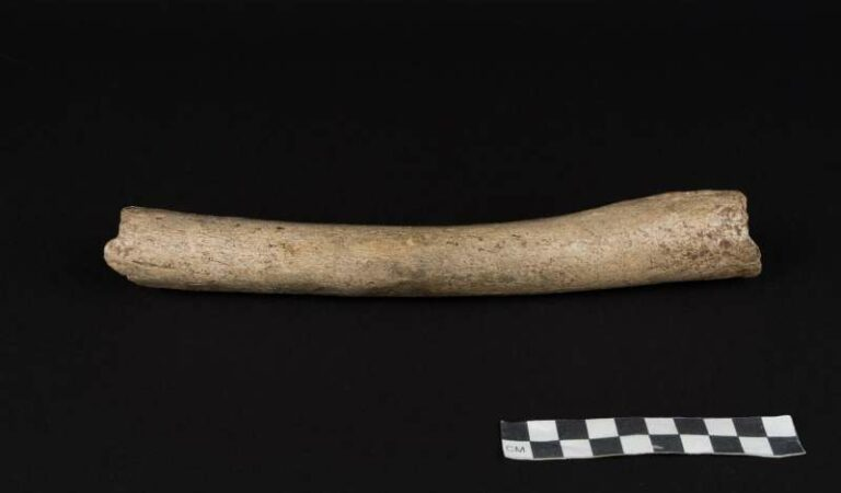 History changer? A 124,000-year-old thigh bone contains modern dna