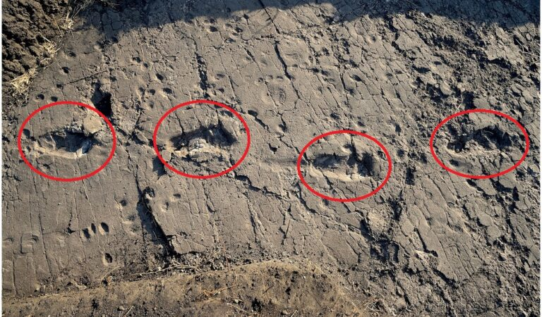 Meet the 3.6 million-year-old footprints of Africa