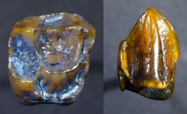 [Image: Ancient-Fossilized-teeth.jpg]