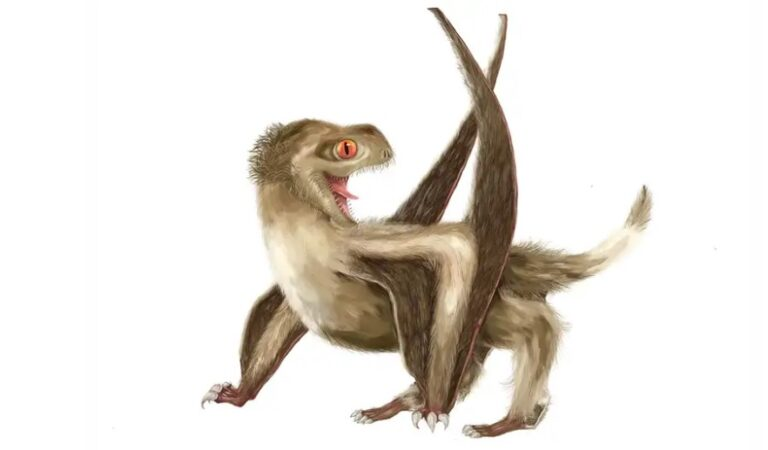 Amazing Fossil Find Shows That Pterosaurs Had Something In Common With Dinosaurs And Birds