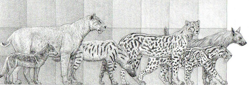 Comparison of Pleistocene carnivores, including hyenas