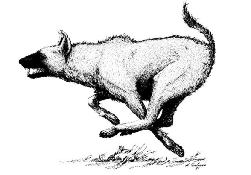 Another representation of Arctic hyenas