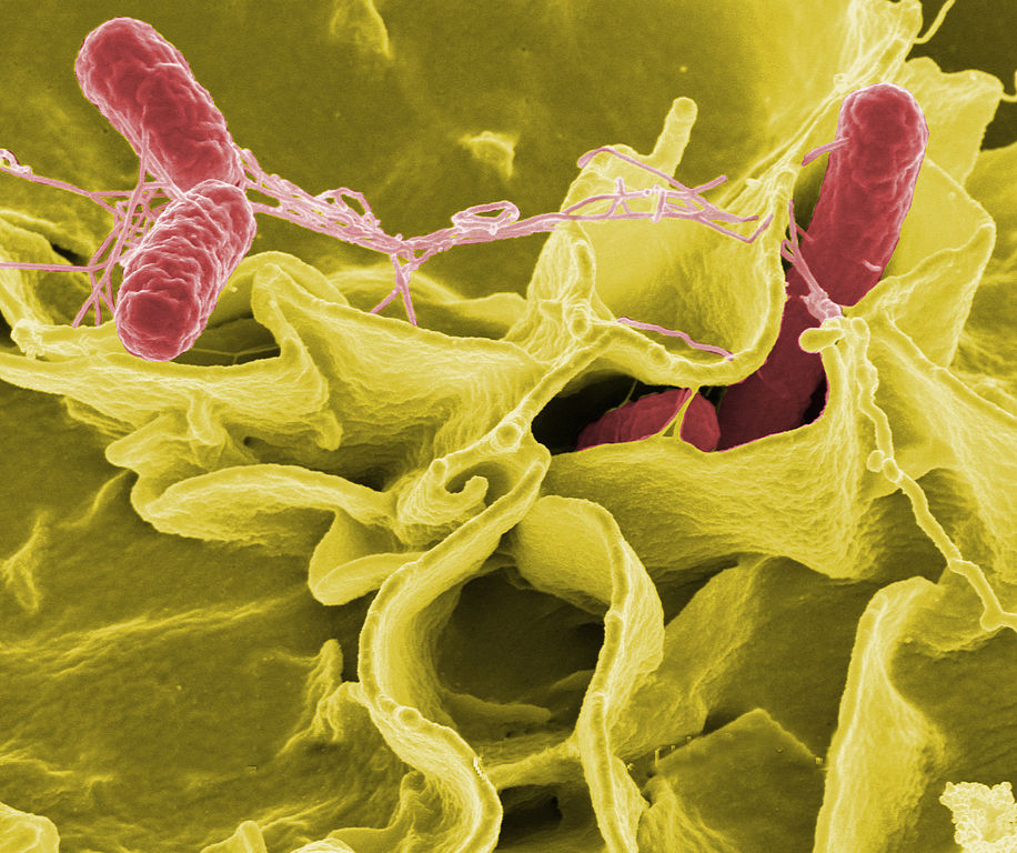 salmonella, strange things sent to space