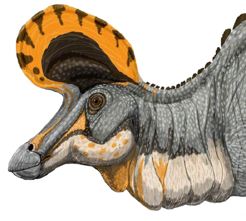 The crests of duck-billed dinos were very diverse