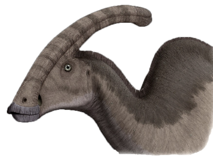 Duck-billed dinos like Parasaurolophus had fascinating features