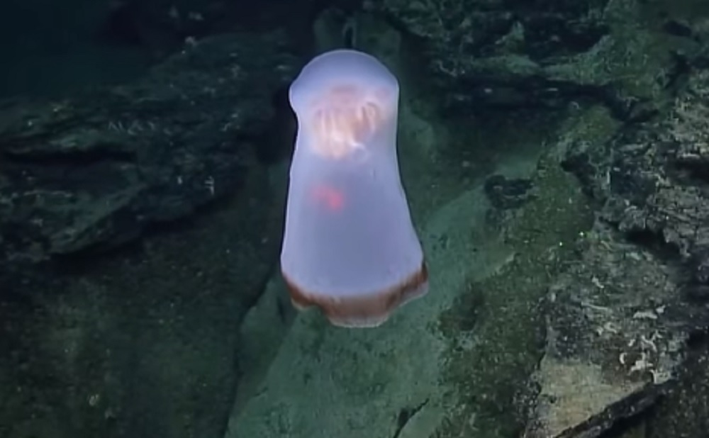 Scientists were full of questions about the jellyfish