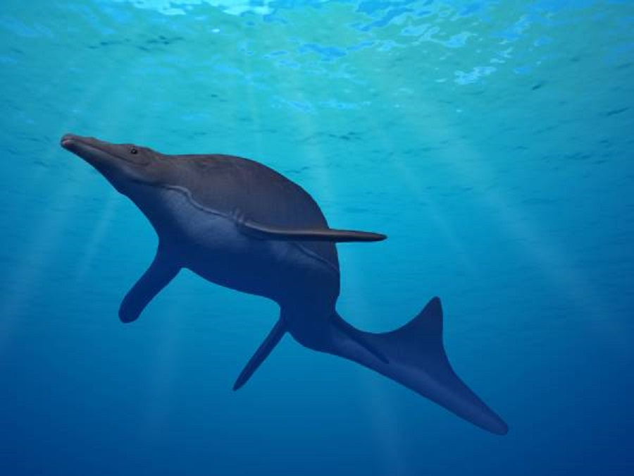 One of the largest mosasaurs